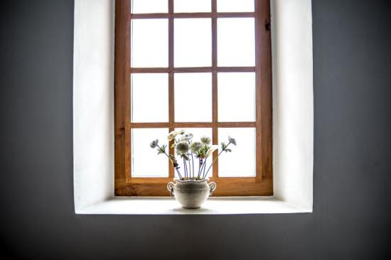 The Best Windows for Plants